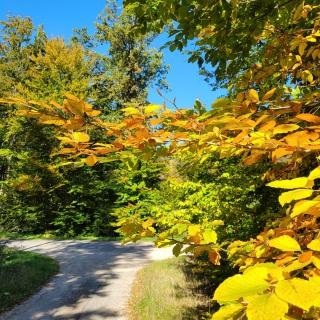 Kolory jesieni 🍂🍁🍃 Też odpoczywacie w terenie?